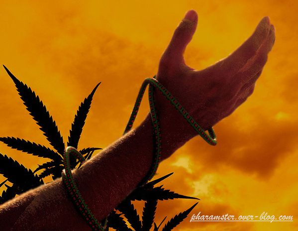 11-03-08-Liberte---cannabis-copie.jpg