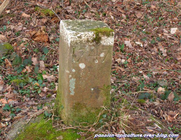 Borne forestière (6)