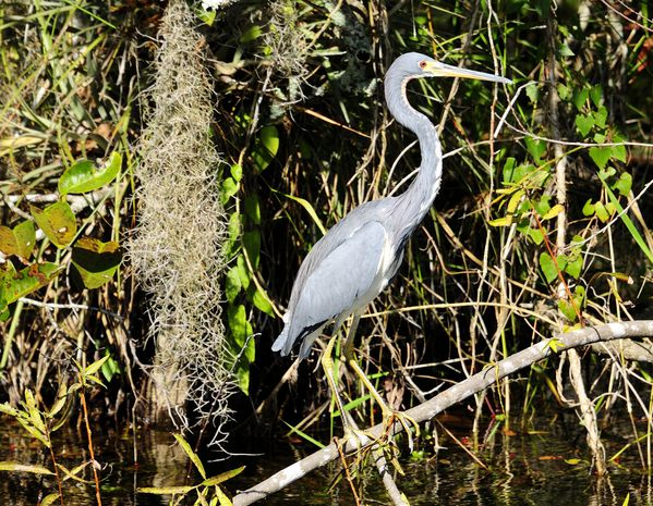everglades by albi