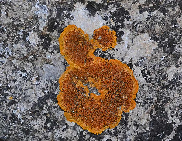 Mousse--lichens--sable-roches-3264_modifie-1.jpg