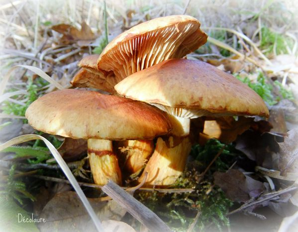 champignons 083 picnik