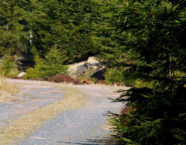 D22 - Prayé - Bipierre - tête blanche roches - Haute Loge