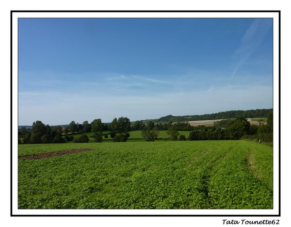Paysage Licques 1