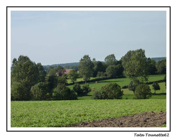 Paysage Licques 2