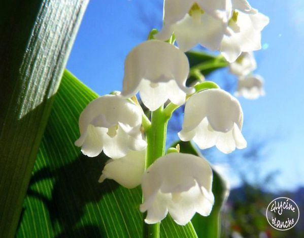 MUGUET-3--1600x1200-.jpg