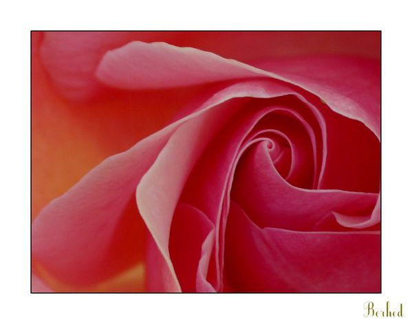 secrets-de-rose-1.jpg