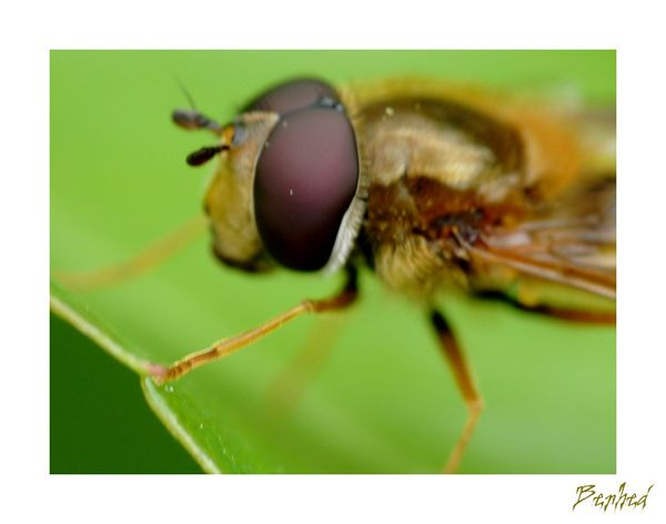 yeux-d-insectes1.jpg
