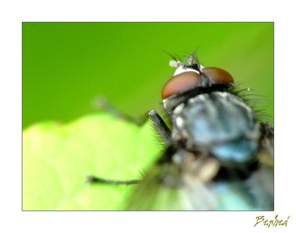 yeux-d-insectes2.jpg