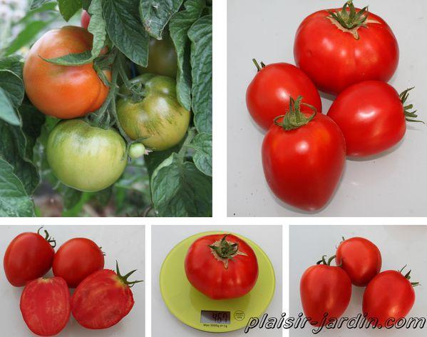 tomate-cobra.jpg