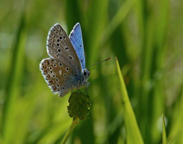 Insectes-papillons-5-8051-aa.jpg