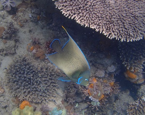 2013 07 28 Madagascar diving 146