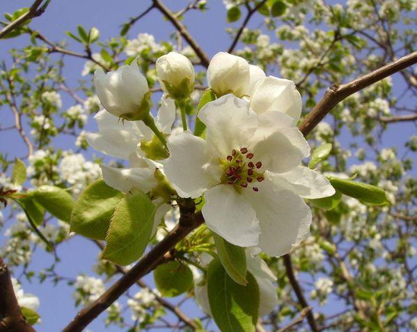 le-printemps---flore--6-.jpg