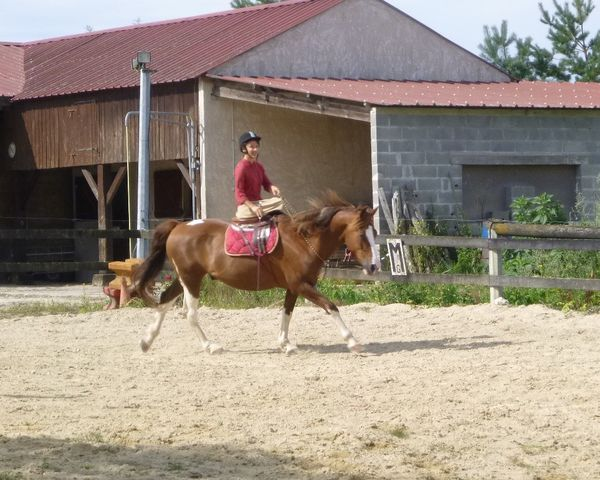 equitation-en-amazone.JPG