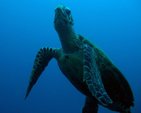 2010-03-10 tortue (6)