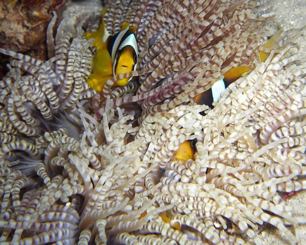 2010-02-22 b3 nuit poissons clowns (8)