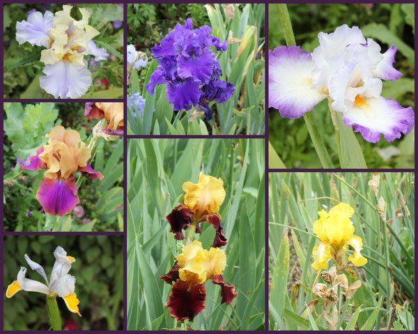 Rencontres iris