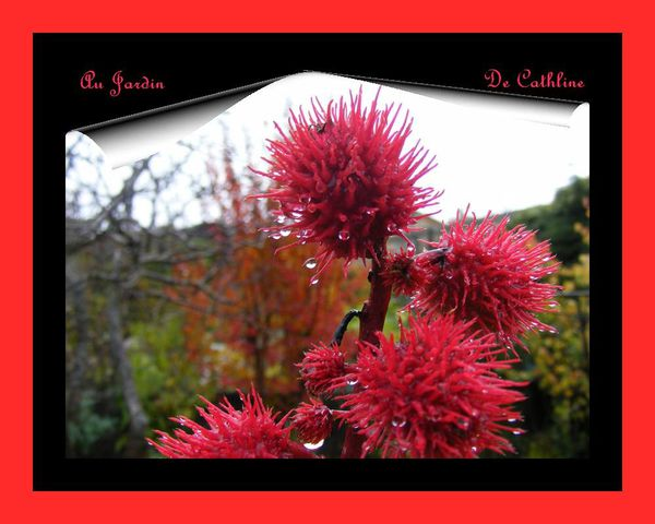 couleur-d-automne---le-ricin-18-novembre-2014--41-.JPG