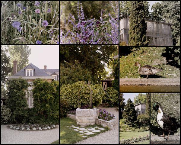 jardin-des-plantes-montage.jpg