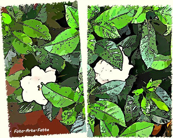 FotoSketcher - IMG 2688.1