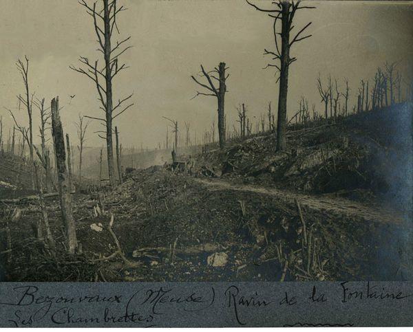 Bezonvaux - Meuse - 1916 - Ravin de la fontaine