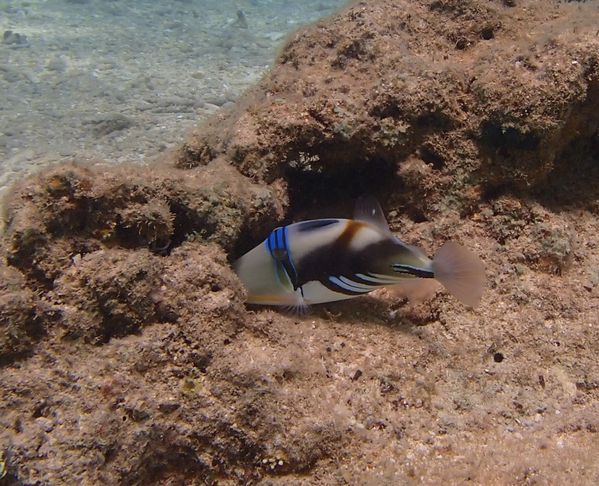 2013 07 28 Madagascar diving 149
