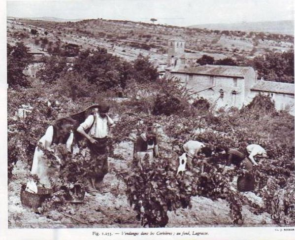 vendanges-Lagrasse.jpg
