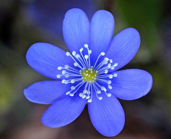 Fleurs-3 0374aa