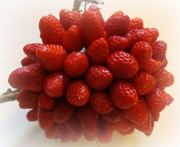 2013-05-02 fraise 020bis