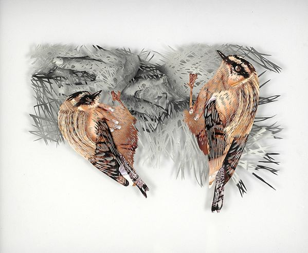 12_tom-gallant-firecrest-2006-paper-cuts-glass--wood-275-x-.jpg