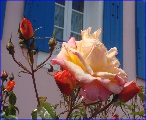 villa-rose-2-s.jpg