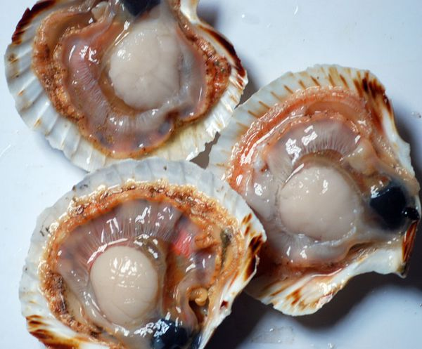 coquille-112011-220.jpg