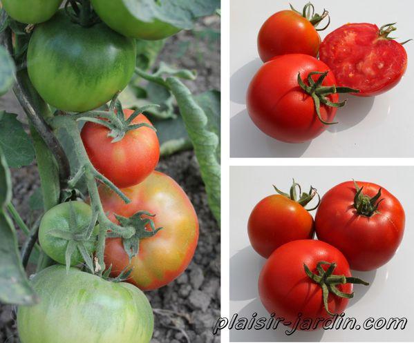 tomate-maestria.jpg