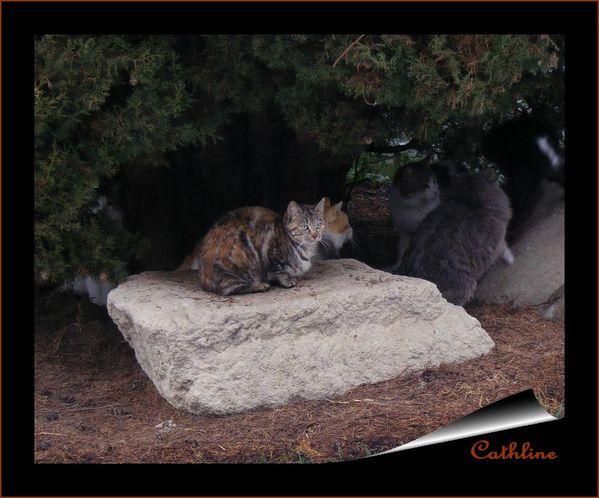 blog chats dans les fouilles