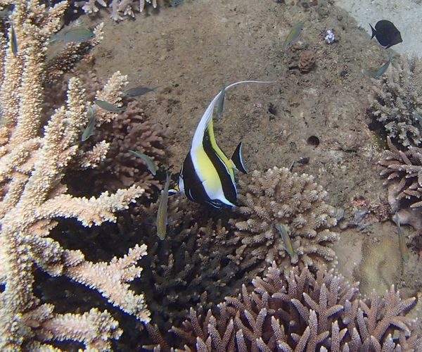 2013 07 28 Madagascar diving 130