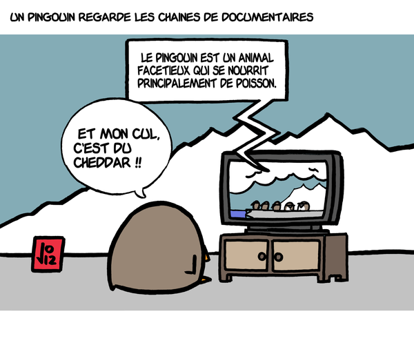 pingouin-documentaire.png