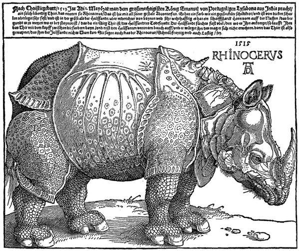 Duerer le rhinoceros