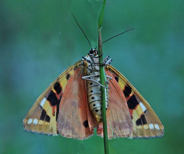 Insectes-papillons-3-2574_modifie-1.jpg