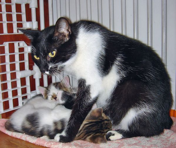 Maman Chatte03