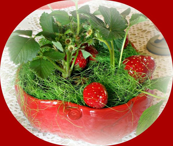 2013-05-02 fraise 014bis ter