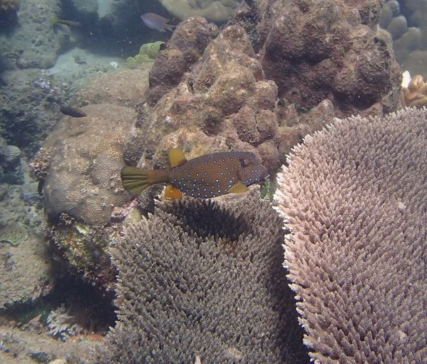2013 07 28 Madagascar diving 131