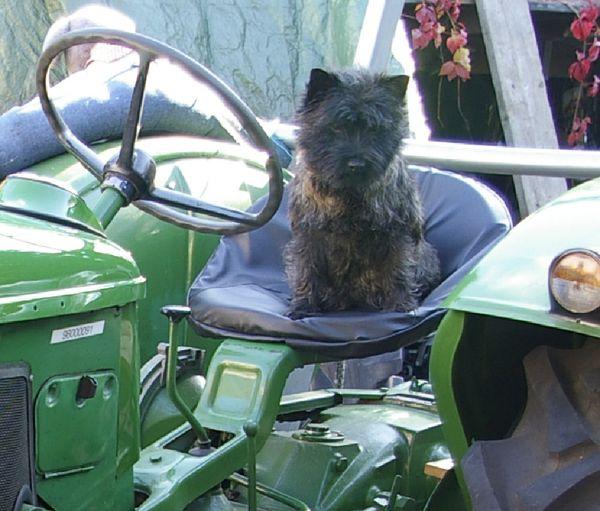 traktor-021.jpg