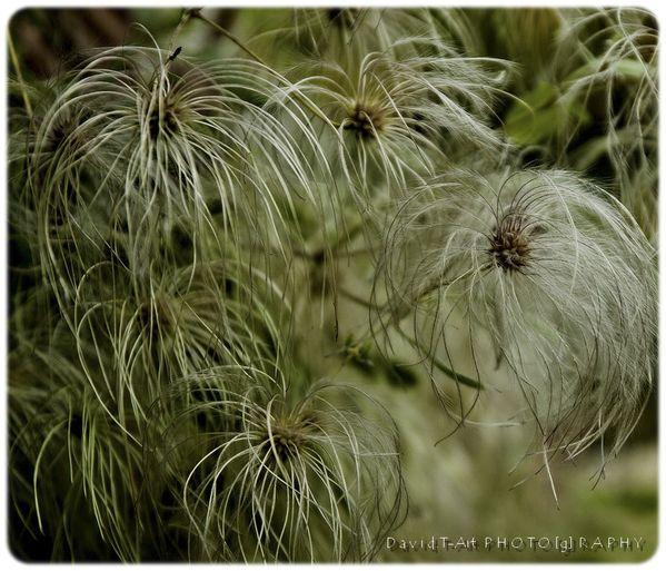 couleurs d'automne (fleurs & plantes) (2)