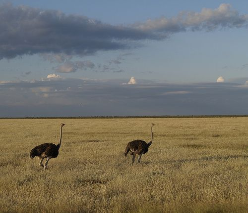Etosha-park.jpg