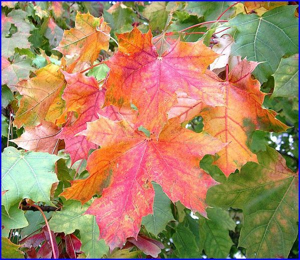 feuilles-plessis-bourre--s.jpg