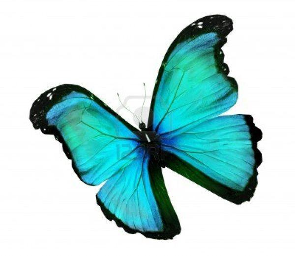 14602785-morpho-bleu-turquoise-papillon-isole-sur-blanc.jpg