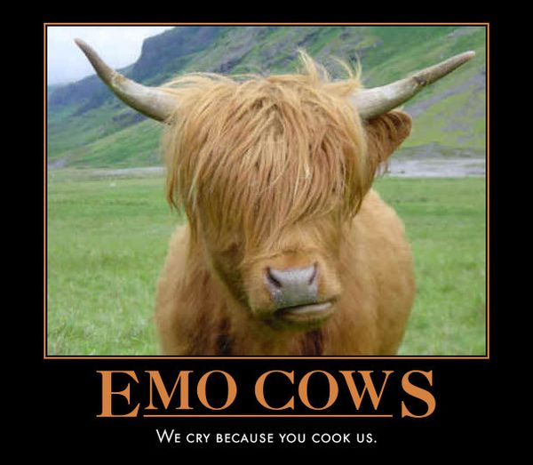 emo_cows_-_we_cry_because_you_cook_us.jpg