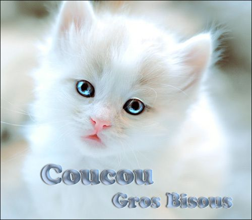 coucou-gros-bisous