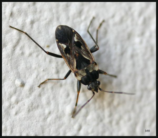 Insectes 02 5092