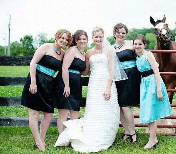 Horse-wedding.jpg