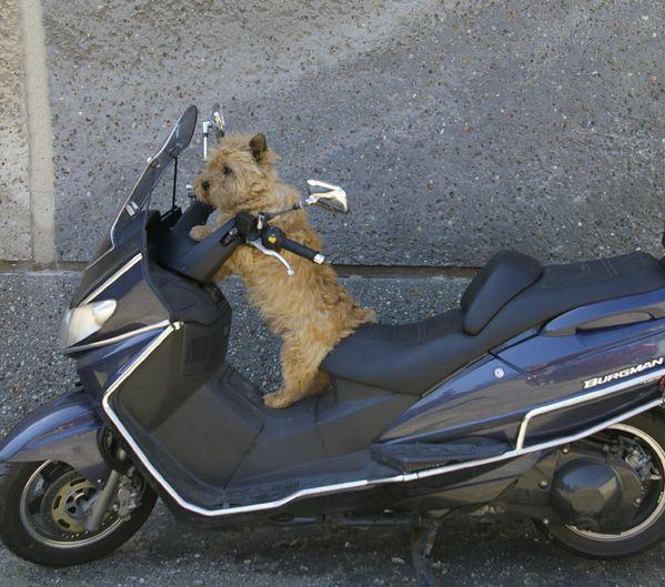 biker-001.jpg